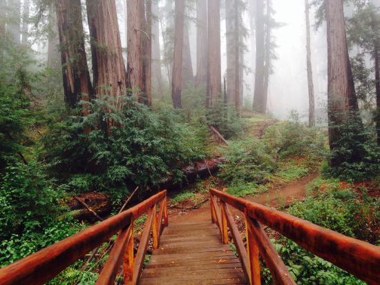 Ewolsdon Trail, Julia Pfeiffer Burns State Park, Big Sur