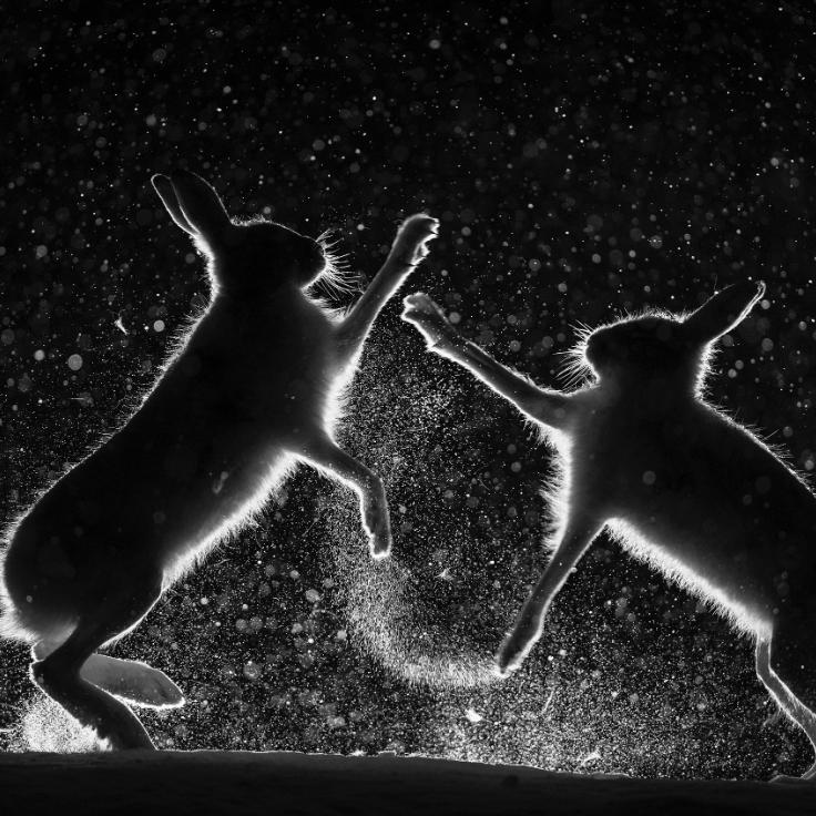 Snow Spat  by Erlend Haarberg