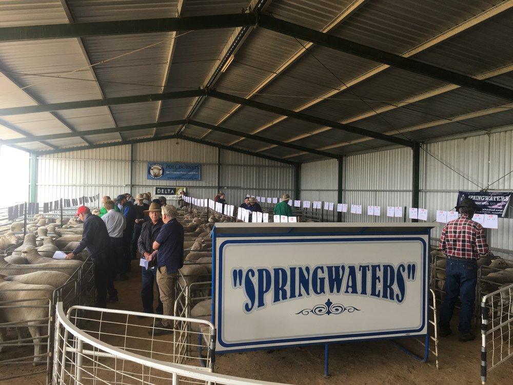 Springwaters Stud Sale.jpg