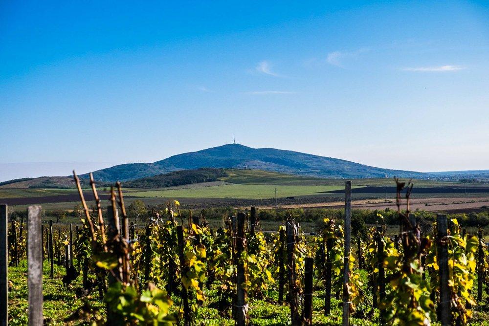 Mt. Tokaj, aka ' Kopasz hegy ', Hungary |  ©John Szabo (published by Jacqui Small)
