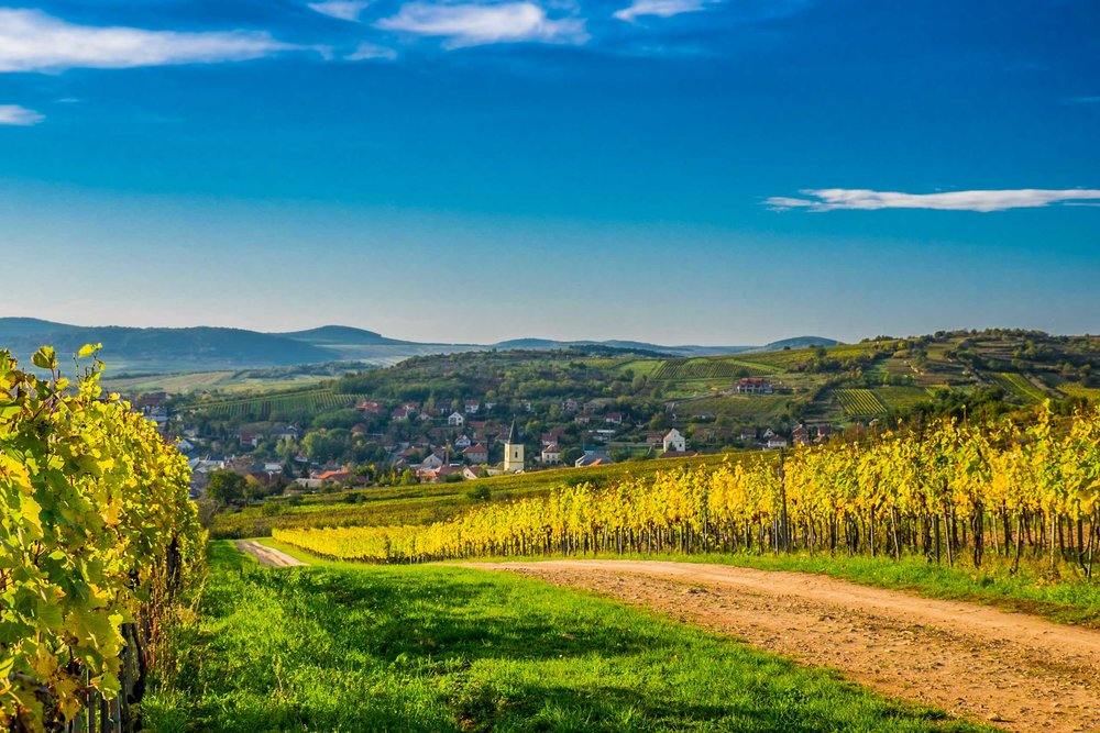 Mád Village and vineyards, Tokaj, Hungary|  ©John Szabo (published by Jacqui Small)