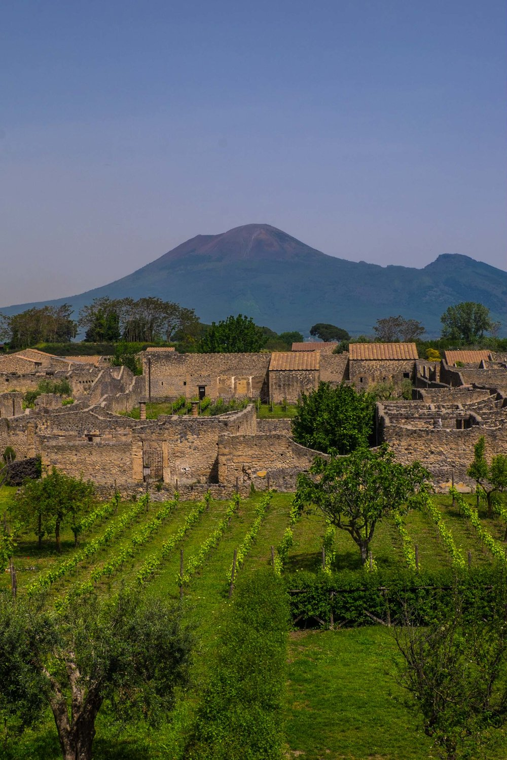 Roman vineyards in Pompeii, Vesuvius in rear |  ©John Szabo (published by Jacqui Small)