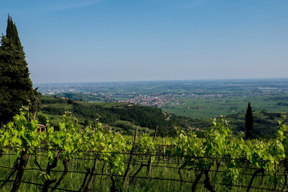 Looking south from the hills of Soave to the plains beyond | ©John Szabo (published by Jacqui Small)