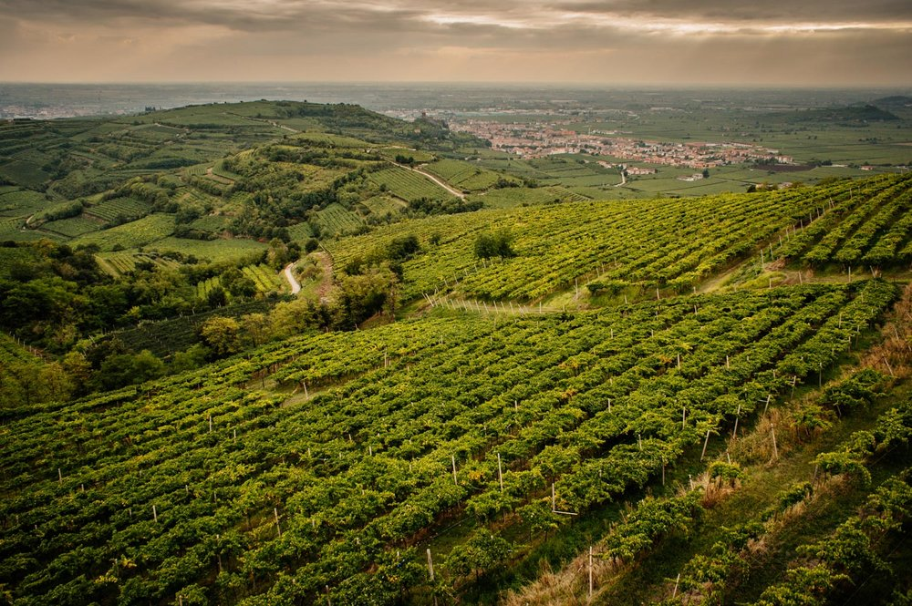 Volcanic Monte Foscarino in the Soave Classico area, Veneto |  ©John Szabo (published by Jacqui Small)