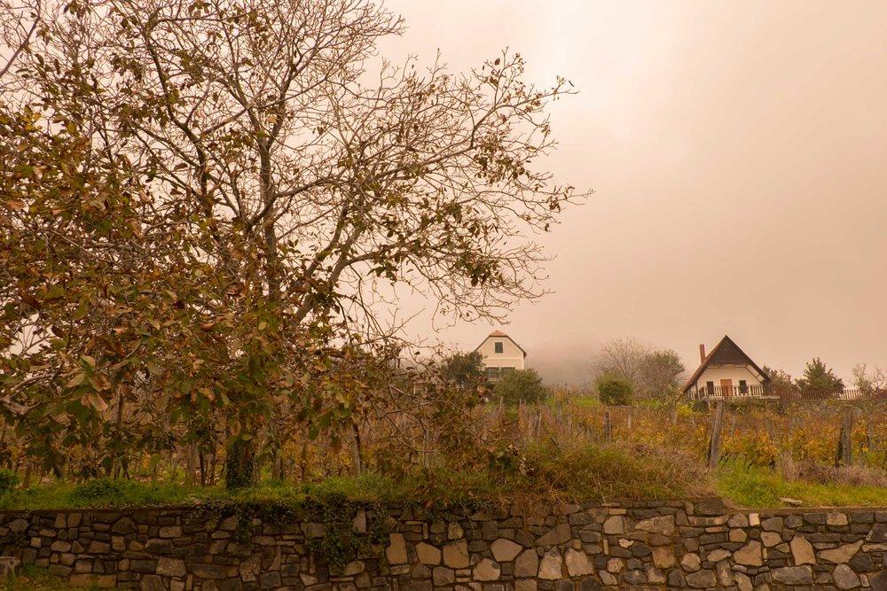 Misty Morning Szent György Hegy, Badacsony |  ©John Szabo (published by Jacqui Small)