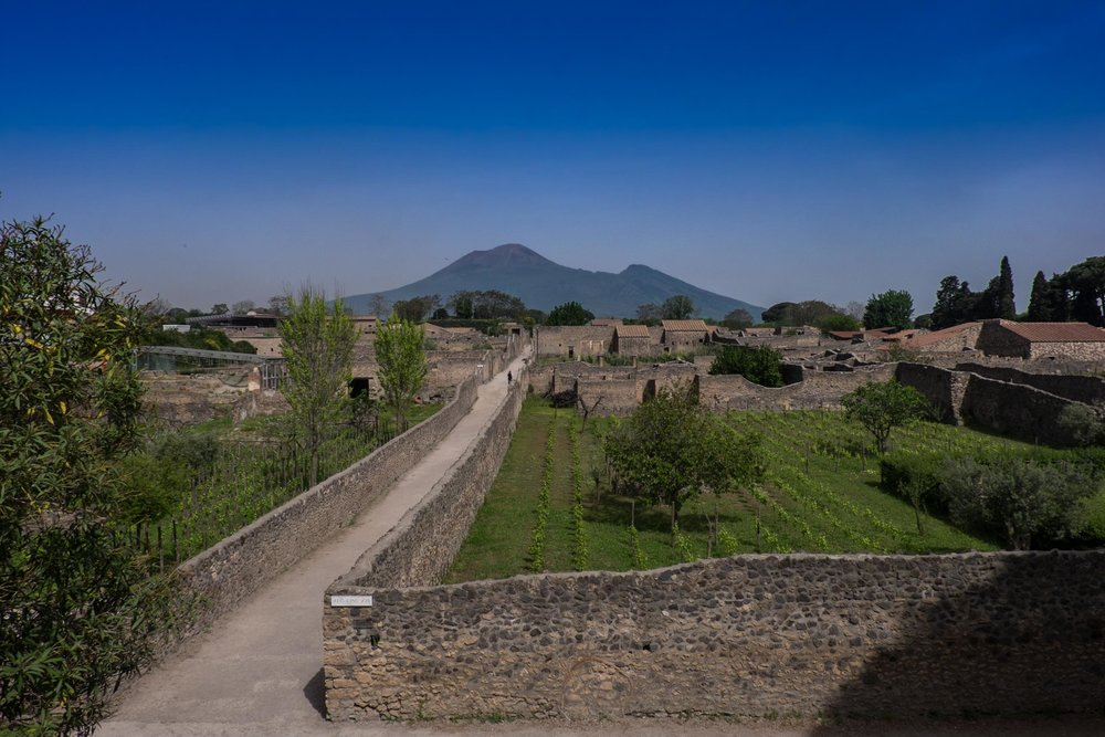 Mastroberardino's Pompeii vineyards, vesuvius behind | ©John Szabo (published by Jacqui Small)