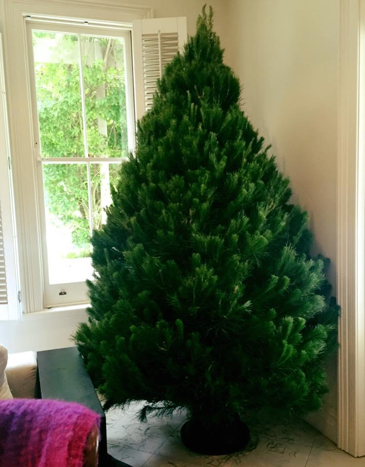 merlinos-amazing-cut-christmas-tree.jpg