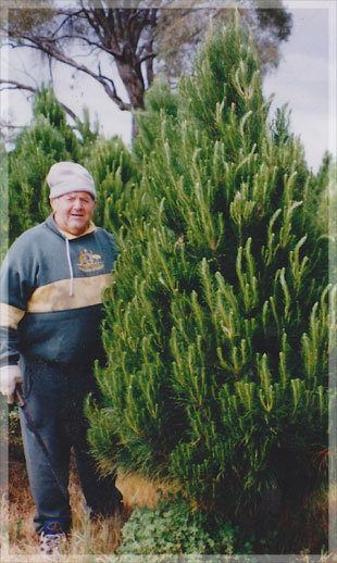 Our grandfather, John Merlino, proudly standing in front of a real 8ft cut Christmas tree.