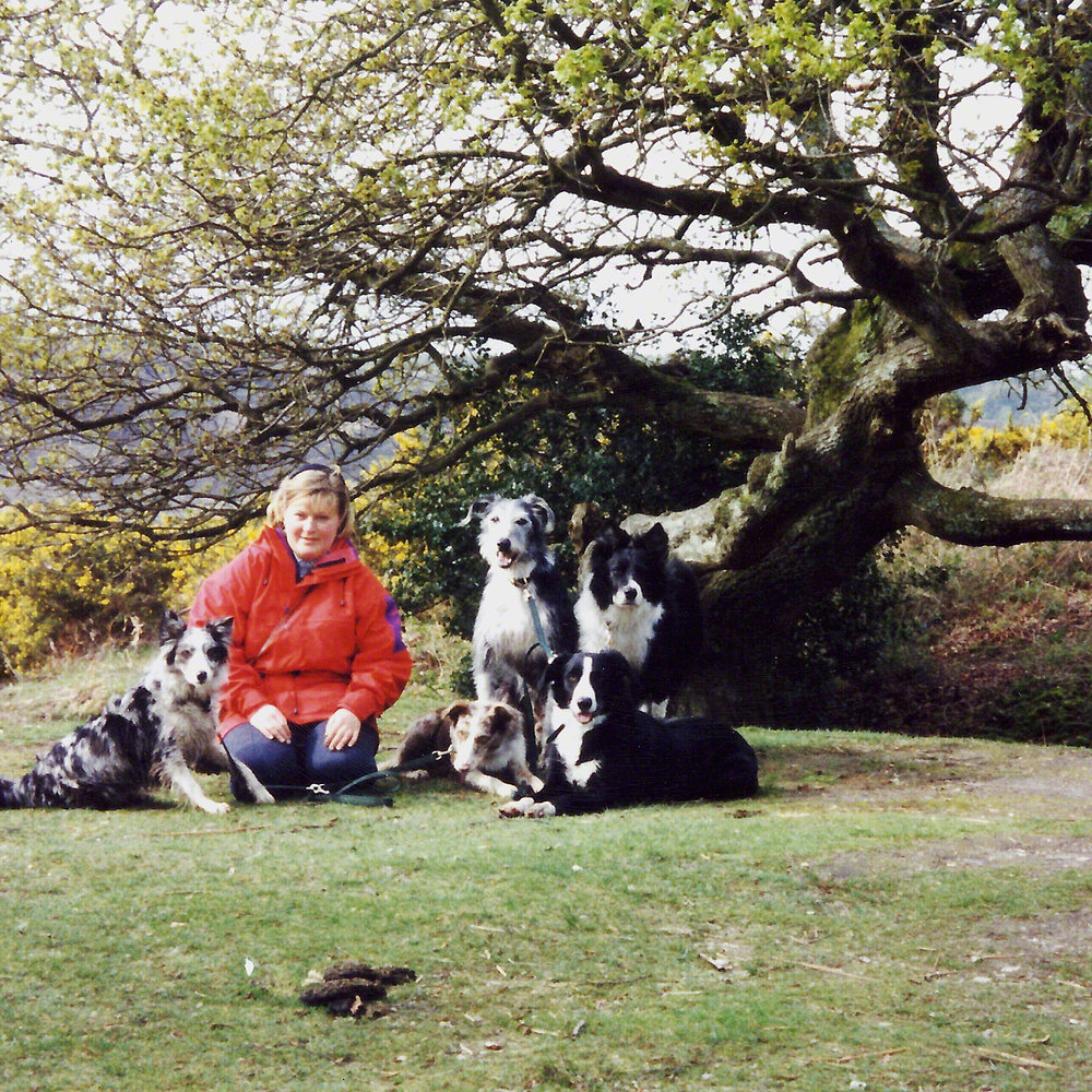 My first dog family in the 1990's. Millie, Finn, Ollie, Storm and Ben.