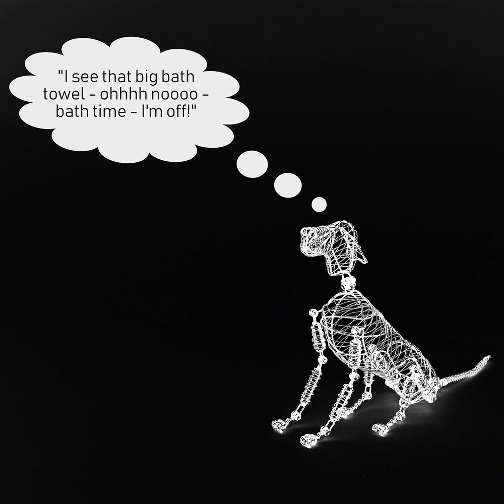 Dogs do what works. - Find out more about how dogs learn and the techniques we use to change behaviour.