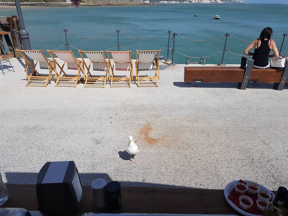 Seagull customer.jpg