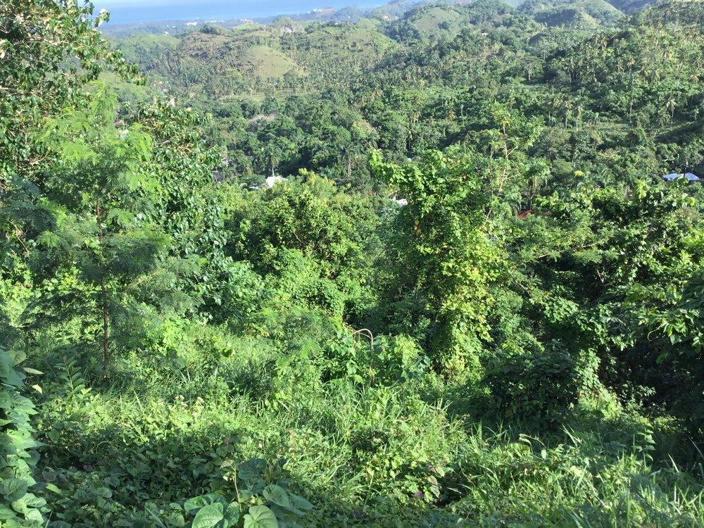 Land for Sale Las Terrenas Garen.jpeg