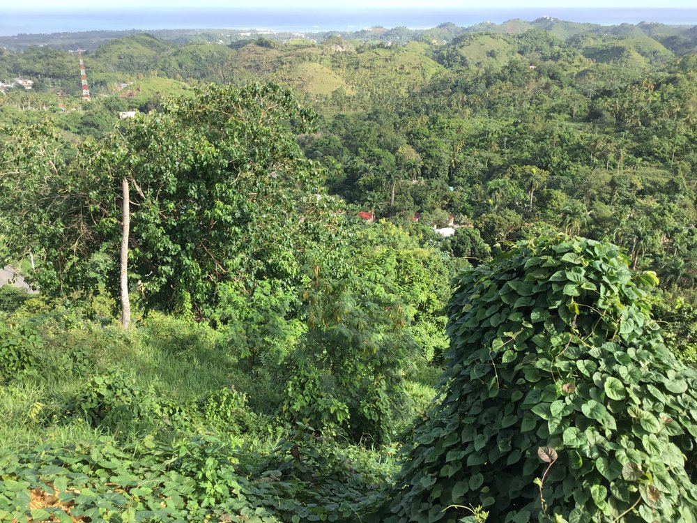 Land for Sale Las Terrenas 2.jpeg