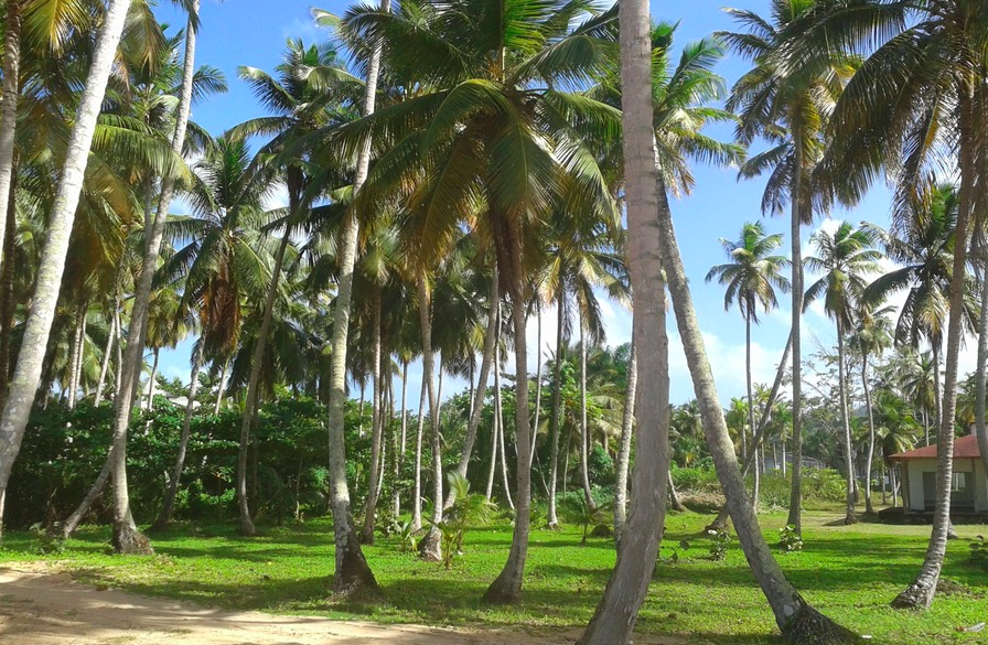 Land for sale coson Las Terrenas beachfront 3.png