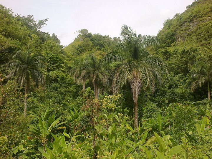 land for sale in abra grande las terrenas 4.jpg