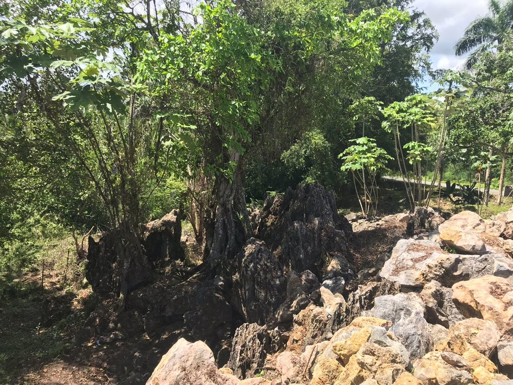 Ocean front Land for sale in Portillo 22.jpeg