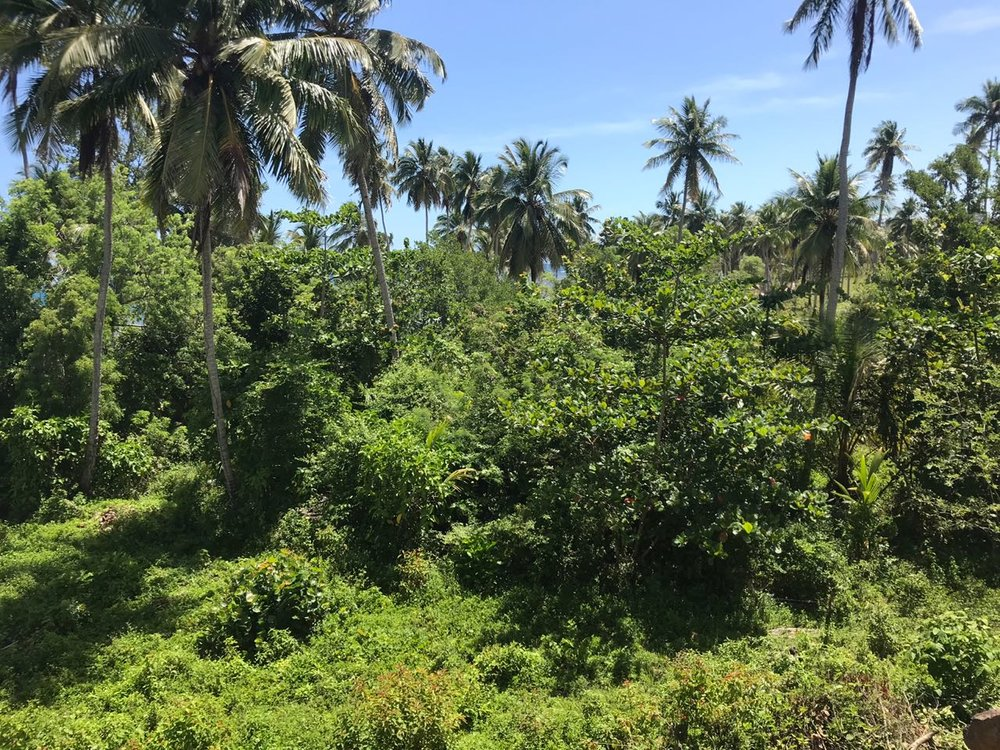 Ocean front Land for sale in Portillo 27.jpeg