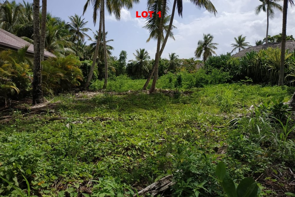 1 Land las terrenas los nomadas for sale 5.jpeg