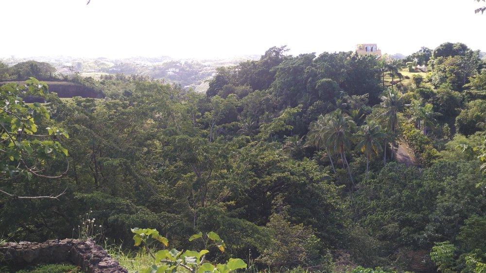 Hill for sale in Las Terrenas Dominican republic 6.jpeg