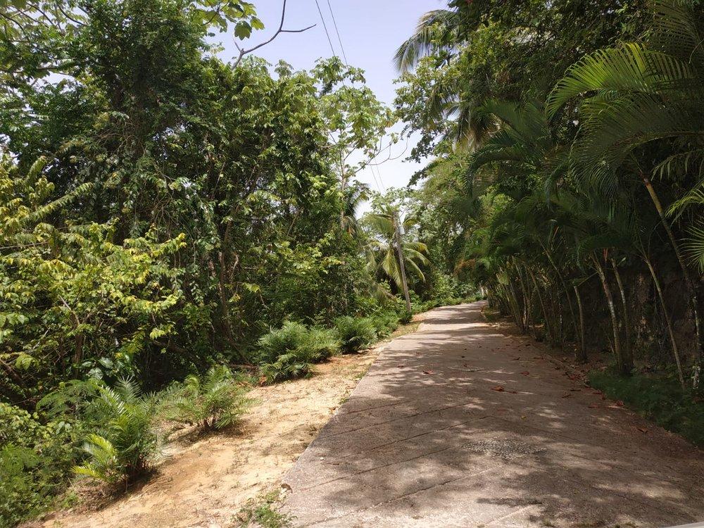 Land to build villa in Las Terrenas DR12.jpeg