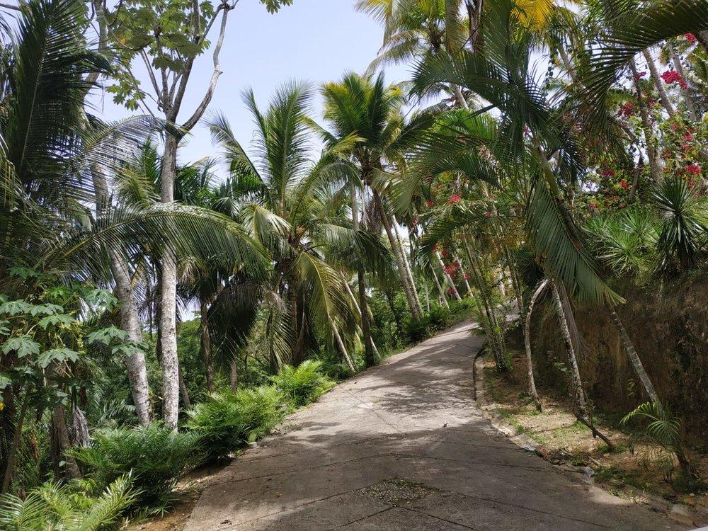 Land to build villa in Las Terrenas DR14.jpeg