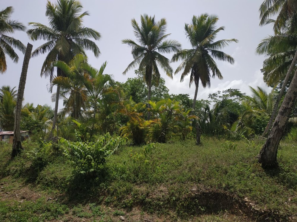 Land to build villa in Las Terrenas DR17.jpeg