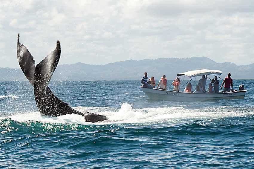Whale watching Samana Bay.jpg