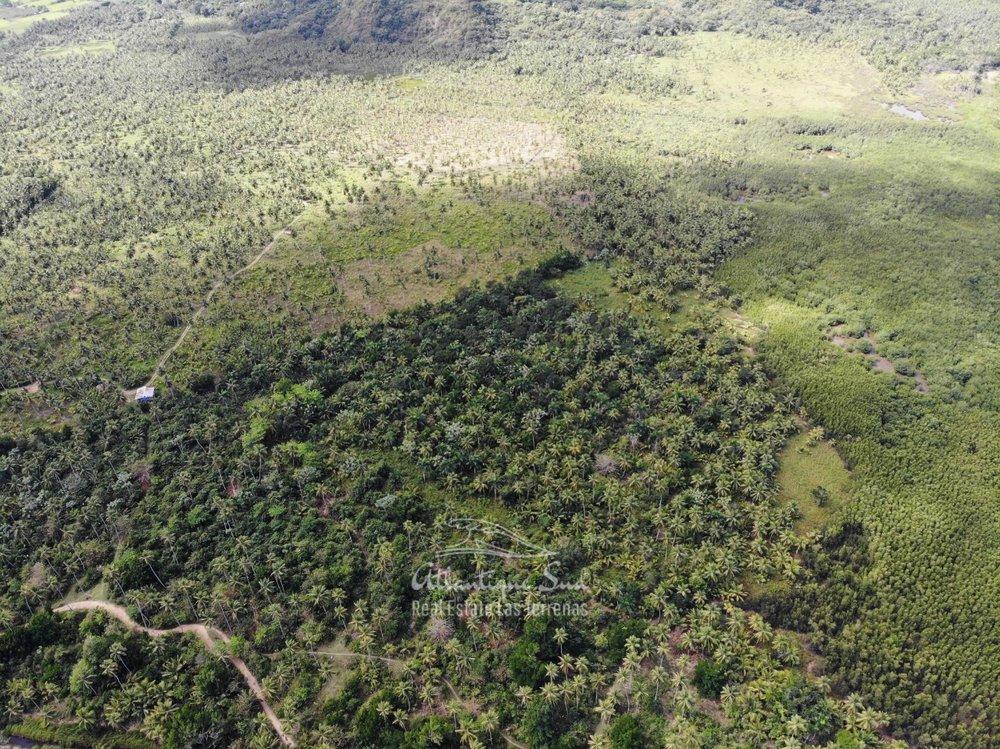 Land for sale El Limon Las Terrenas DR 8.jpeg