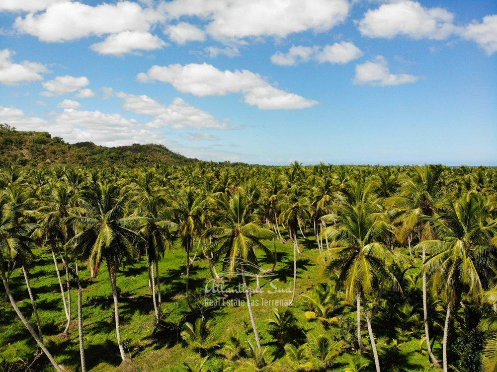 Land for sale El Limon Las Terrenas DR 19.jpeg