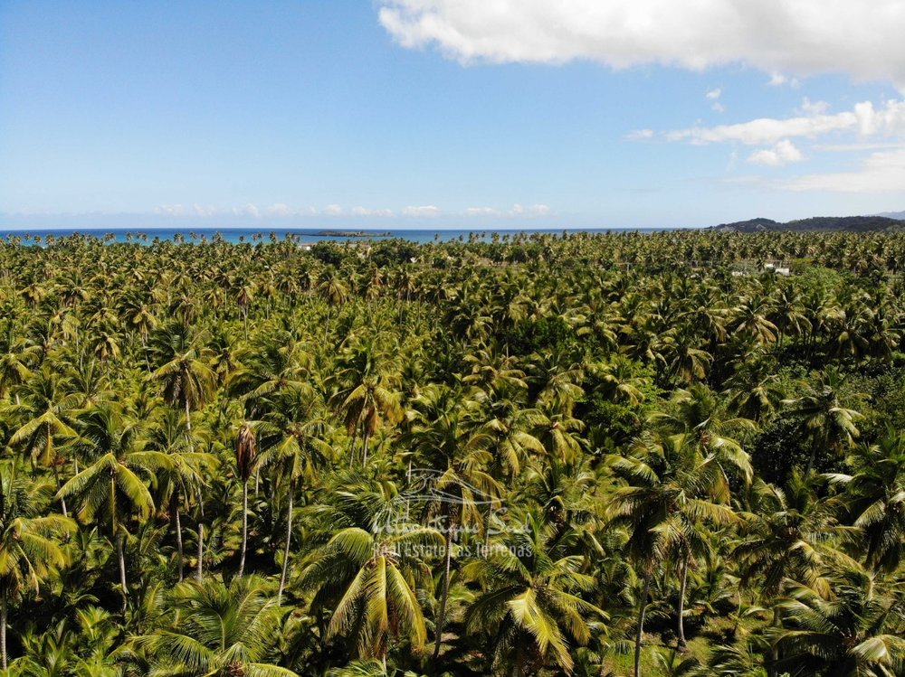 Land for sale El Limon Las Terrenas DR 22.jpeg