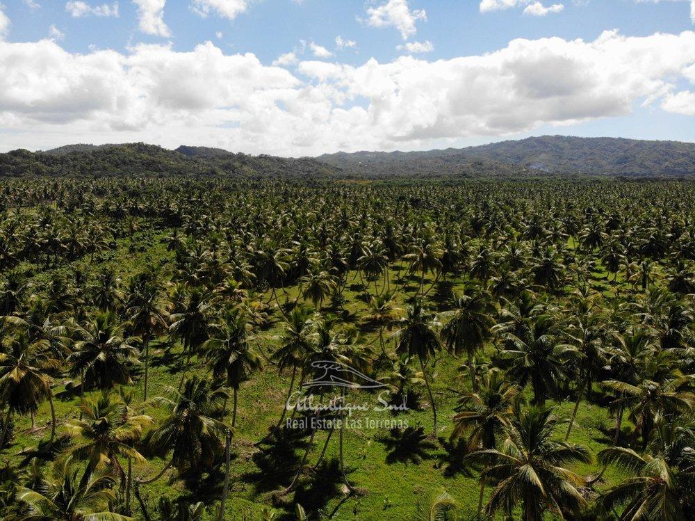 Land for sale El Limon Las Terrenas DR 23.jpeg