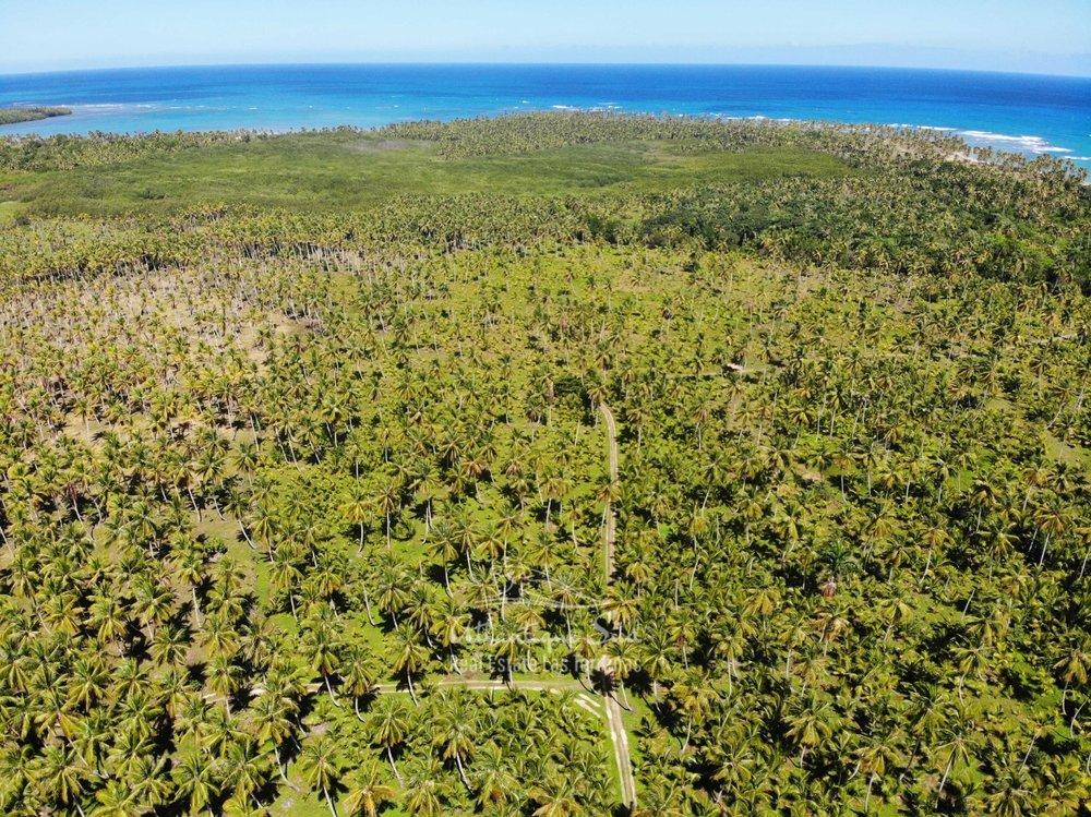 Land for sale El Limon Las Terrenas DR 27.jpeg