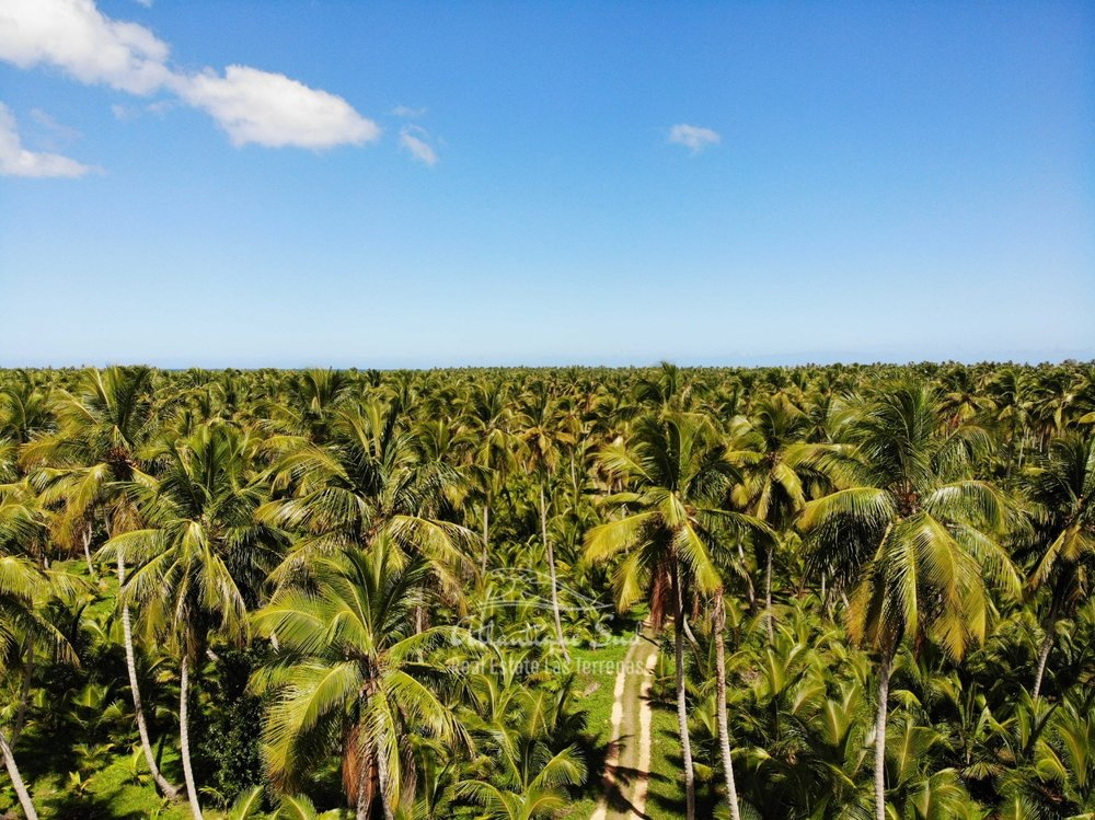 Land for sale El Limon Las Terrenas DR 30.jpeg