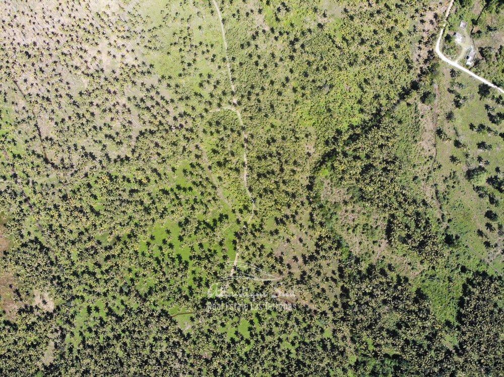 Land for sale El Limon Las Terrenas DR 38.jpeg