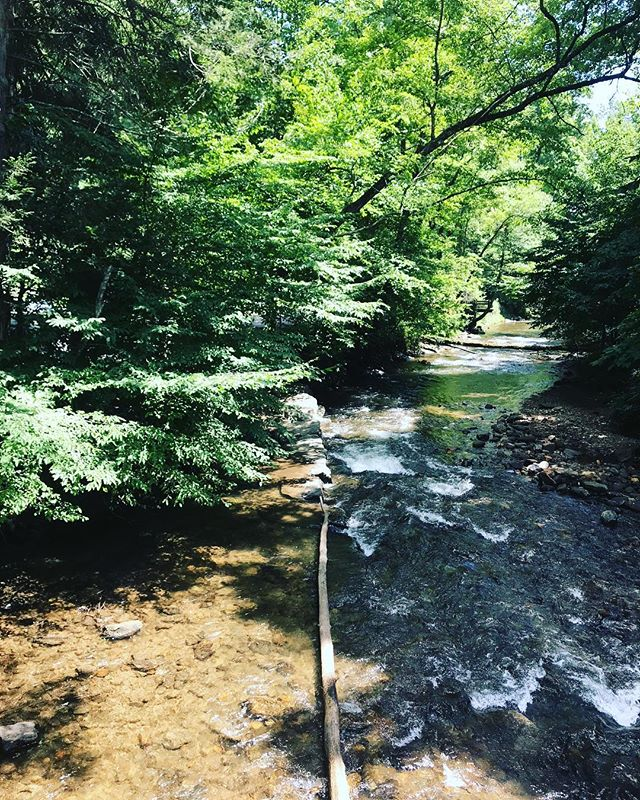 The River Runs Through it....it being North Mills River Campground. ⠀ ⠀ #northmillsrivercampground  #getoutside #river #campgrounds #camping #intothewoods #nature #takeawalk #pisgahnationalforest  #asheville #visitasheville #828isgreat #throughthewoods #happytrails #tubing #downtheriver #summerfun ⠀