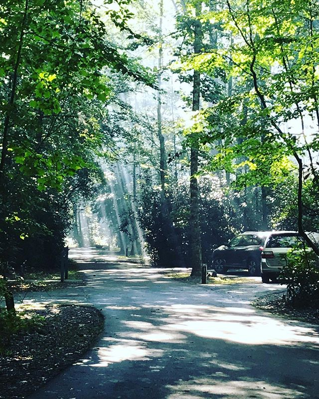 I am not even going to caption this one. #sunrays ⠀ ⠀ #davidsonriver #davidsonrivercampground  #getoutside #campgrounds #camping #intothewoods #nature #takeawalk #pisgahnationalforest  #asheville #visitasheville #828isgreat #throughthewoods #happytrails #tubing #downtheriver #summerfun⠀