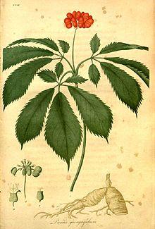 American-Ginseng.jpg