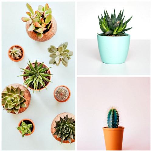 Plants-Help-Spruce-Up-Rentals.jpg