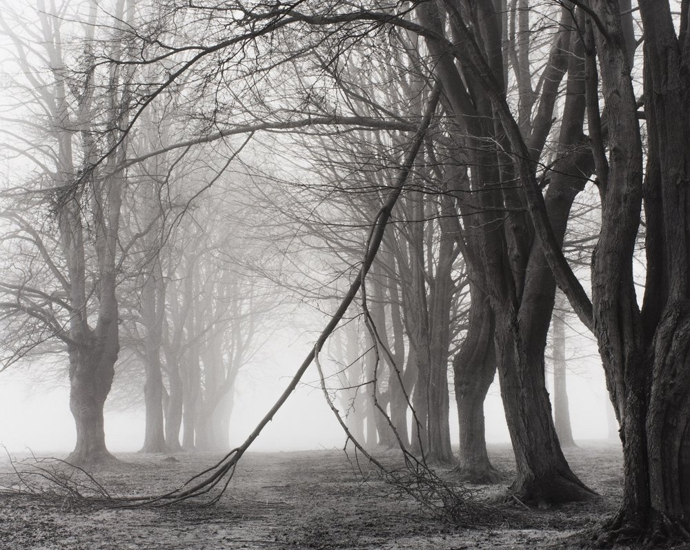 Avenue of Trees - photographer, Peter Cattrell
