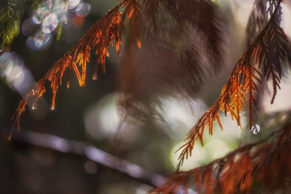 Whistler Woodland No 5