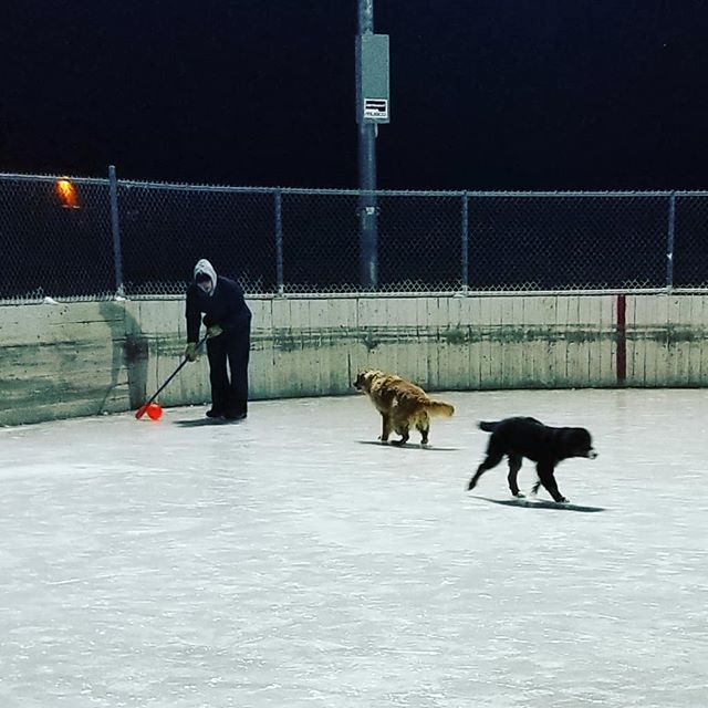 Dog players keeping equipment costs* down since 2019. *broom balls not included. #dog #defence #broomball #winter #sports #minnesota #slp  #inatantreplaysports #smallbusiness #locallyowned #2019