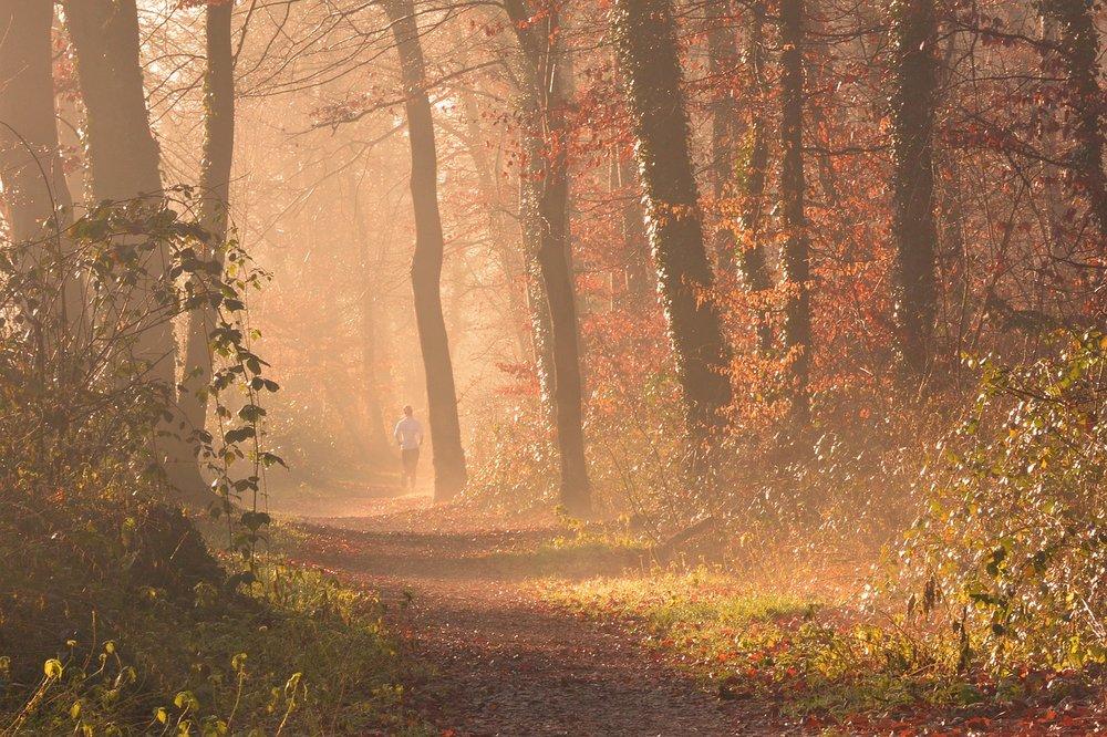 fog-1856722_1280.jpg