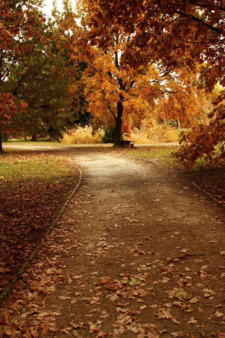 autumn_sidewalk_by_deimin-d4efdtc.jpg