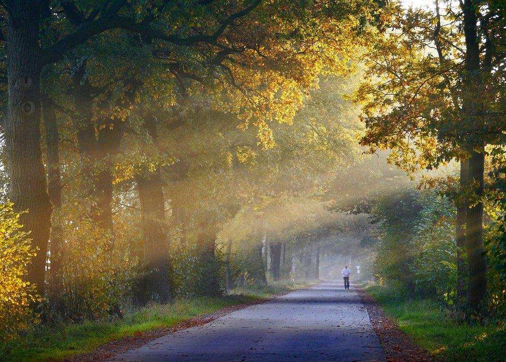autumn-1751764_1280.jpg