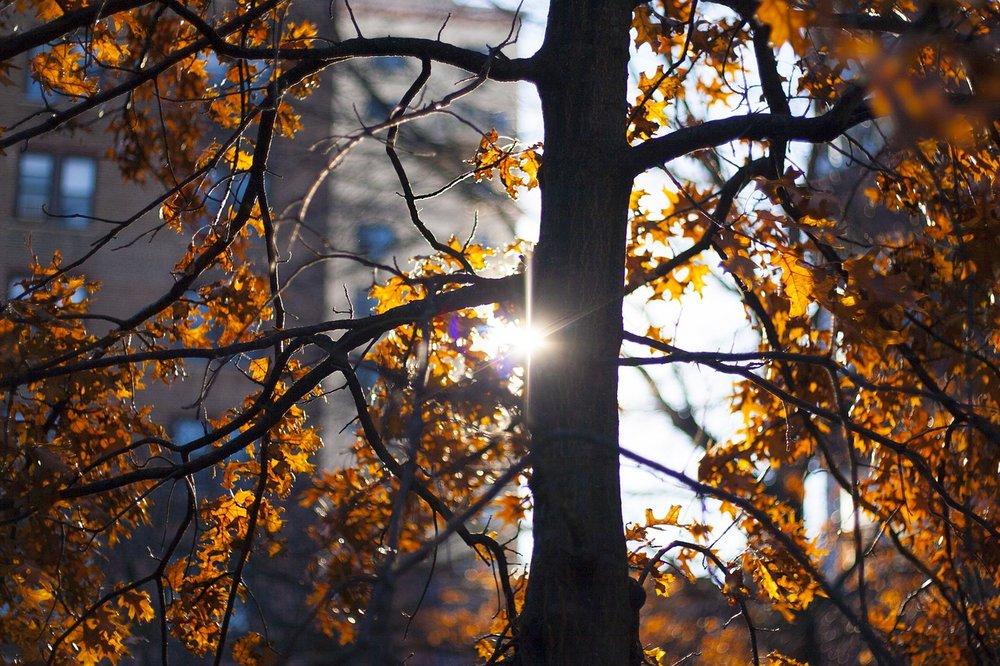 autumn-3207352_1280.jpg