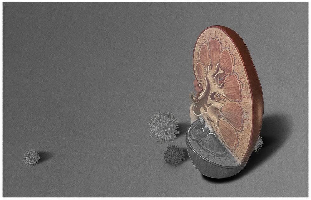 Sourcebook_Portfolio_Kidney.jpg
