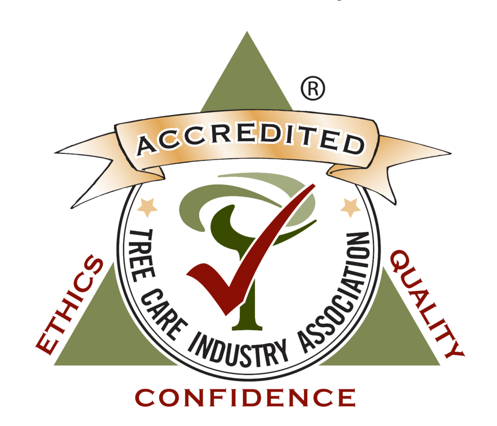 TCIA accredited.png