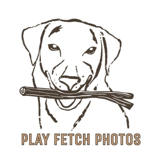 Play Fetch Photos | Wag Worthy Pet Portraits