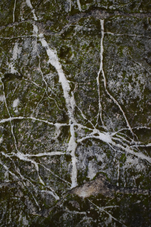 tentacular-balustrade-moss.jpg