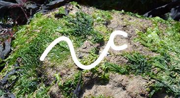 tentacular-tentacle-right.jpg